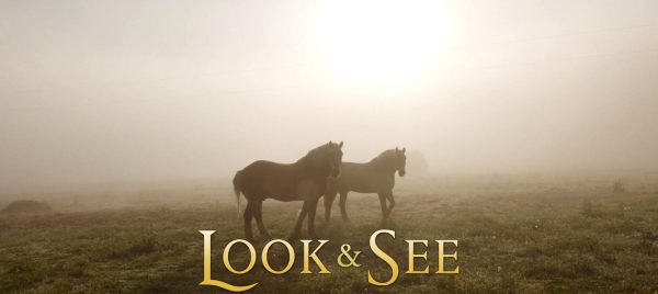 SouthArts Film Series: LOOK AND SEE:  A Portrait of Wendell Berry